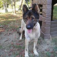 Adopt A Pet :: Ezra - Louisville, KY