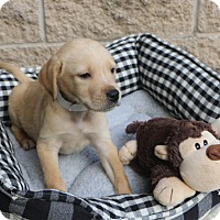 Adopt A Pet :: Frisco - Norwalk, CT