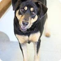 Shepherd (Unknown Type) Mix Dog for adoption in Yukon, Oklahoma - Meereen