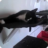 Adopt A Pet :: Dean - Medford, NY