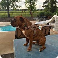 Adopt A Pet :: Mr. Magoo - Virginia Beach, VA