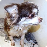 Adopt A Pet :: TESSA - Anderson, SC