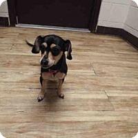 Adopt A Pet :: LITTLE BIT - Pearland, TX