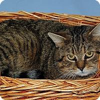 Adopt A Pet :: Diego - Gatineau, QC