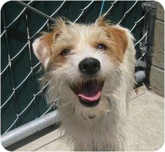 dagwood adopted dog yorba linda ca jack russell