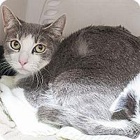 Adopt A Pet :: Tootsie - North Haledon, NJ