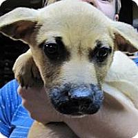 Adopt A Pet :: Sheldon - South Jersey, NJ