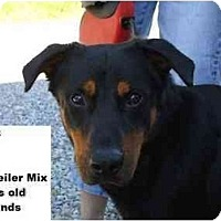 Adopt A Pet :: Rab - RESCUED! - Zanesville, OH