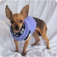 Adopt A Pet :: Dina - Mooy, AL