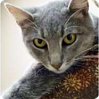 Adopt A Pet :: Chantel - Chicago, IL