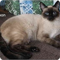 Adopt A Pet :: Simon - Portland, OR