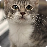 Adopt A Pet :: Jan - Sacramento, CA