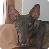 Adopt A Pet :: Vida - Arenas Valley, NM