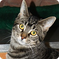 Adopt A Pet :: Breeze - North Branford, CT