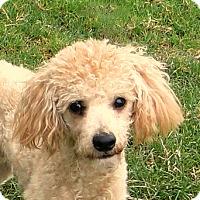 Adopt A Pet :: Milo - Walnut Creek, CA