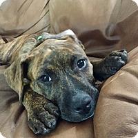 Adopt A Pet :: Pumpkin - Miami, FL