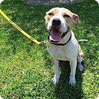 Adopt A Pet :: Noah - Baton Rouge, LA