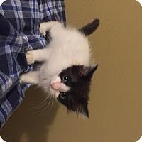 Adopt A Pet :: Clementine - San Antonio, TX
