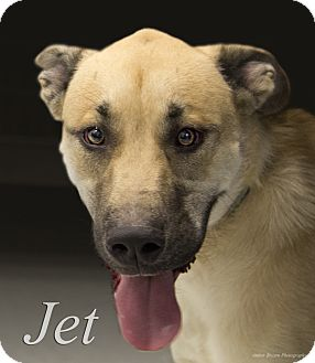 German Shepherd Dog Mix Dog for adoption in Martinsville, Indiana - Jet