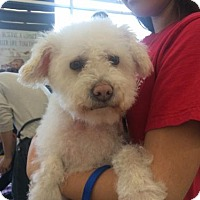 Adopt A Pet :: Babe - San Pedro, CA
