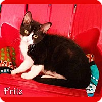 Adopt A Pet :: Fritz - South Bend, IN