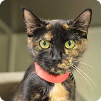 Adopt A Pet :: Princess Love (foster care) - Philadelphia, PA