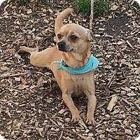 Adopt A Pet :: Edgar - Va Beach, VA