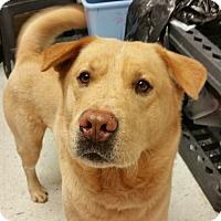 Adopt A Pet :: Fadi - Chambersburg, PA
