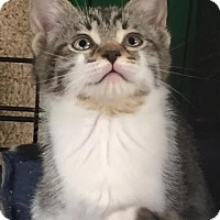 Adopt A Pet :: Moon Bear - Ortonville, MI
