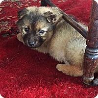 Adopt A Pet :: Sparky - Brooklyn Center, MN