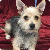 Adopt A Pet :: Spike - Brattleboro, VT