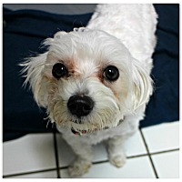 Adopt A Pet :: Carly - Forked River, NJ