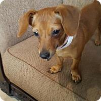 Adopt A Pet :: Story - Littleton, CO