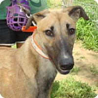 Adopt A Pet :: Vegas - Gerrardstown, WV