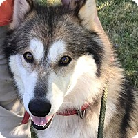 Adopt A Pet :: Max - Zanesville, OH