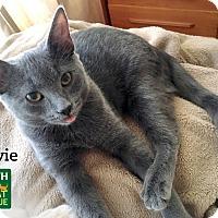 Adopt A Pet :: Sylvie - Oakville, ON