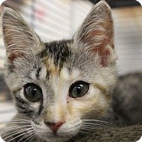 Adopt A Pet :: Giselle - Sarasota, FL