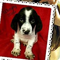 Adopt A Pet :: Wimpy-pending adoption - Manchester, CT