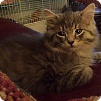 Adopt A Pet :: Ajax - Chelsea - Kalamazoo, MI