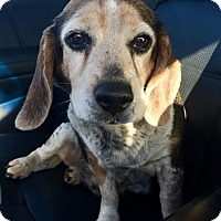 Adopt A Pet :: Rosie - Lisbon, IA