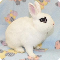 Adopt A Pet :: Hawkeye - Chesterfield, MO
