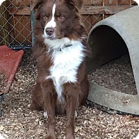 Adopt A Pet :: Tank - Newport, KY