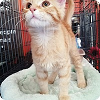 Adopt A Pet :: Callahan - Cerritos, CA