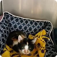 Adopt A Pet :: Swizzle - Chippewa Falls, WI