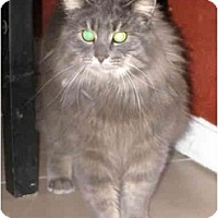 Adopt A Pet :: Roxanne - Xenia, OH