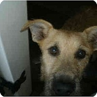 Adopt A Pet :: Rosie - Alexandria, VA