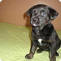 Adopt A Pet :: Kandi - Saskatoon, SK