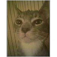 Adopt A Pet :: Abbott - Owasso, OK
