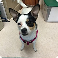Adopt A Pet :: Lizzie 2yr Adopted - Mentor, OH