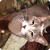 Adopt A Pet :: Mimi Bunny - Ravenna, TX